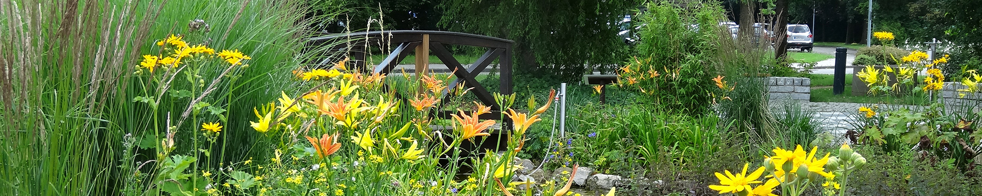 banner-thw-greunanlage-park-lilie-taglilie-gelb-teich-bruecke